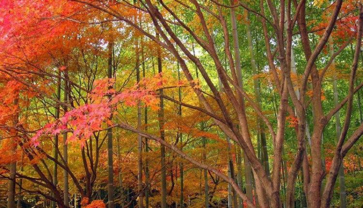 O que são Florestas Temperadas