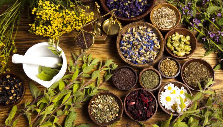 tudo sobre plantas medicinais