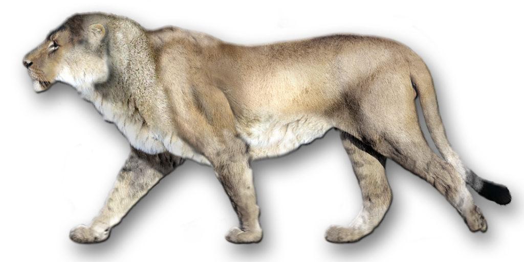 Leão-americano
