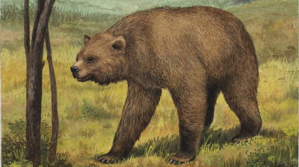 Urso-de-cara-achatada