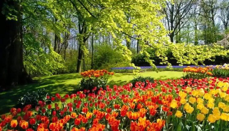 Plano de aula sobre a Primavera: Girassol