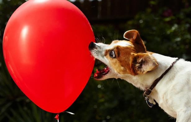 Balões de estresse