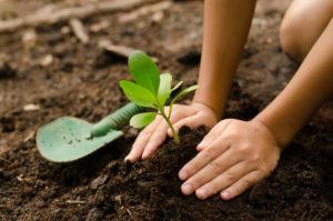 Ensinando a plantar