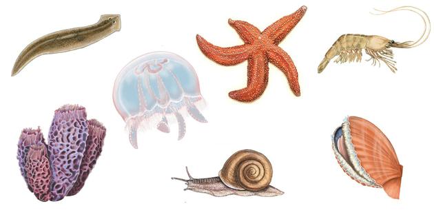 Conheca 10 Animais Invertebrados Escola Educacao