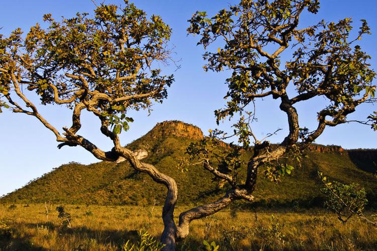 Cerrado - Vegetação da região Centro-Oeste