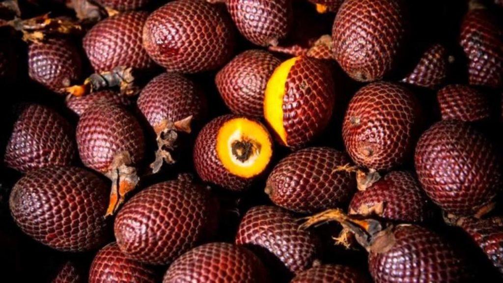 Fruta com B - Buriti
