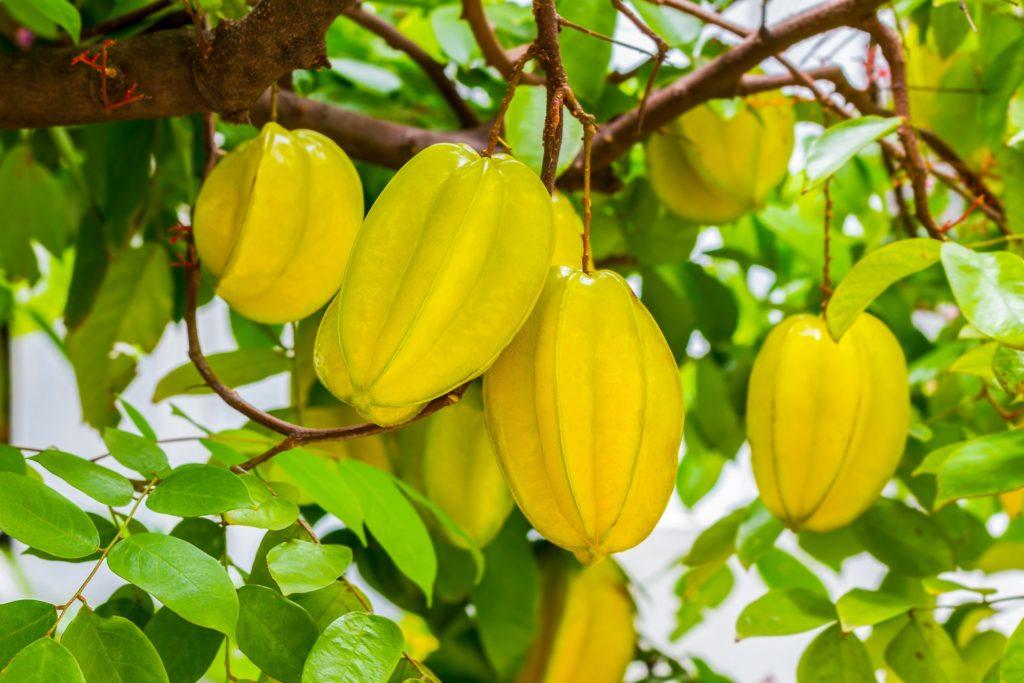 Fruta com C - Carambola