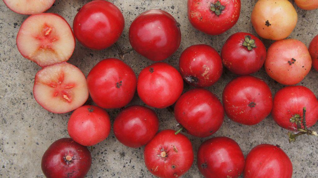 Fruta com E - Esfregadinha