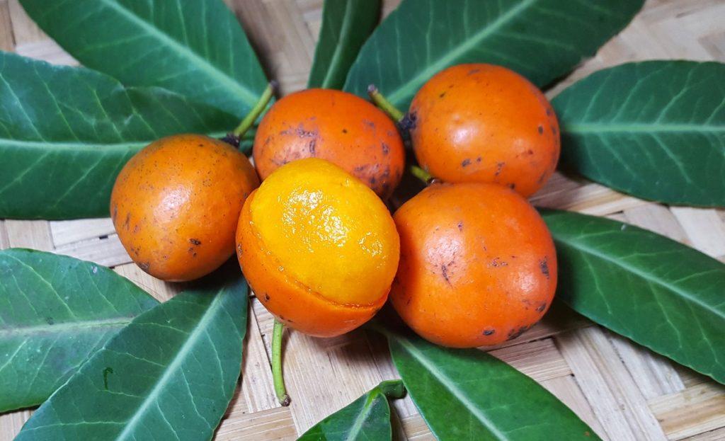 imbé-fruta