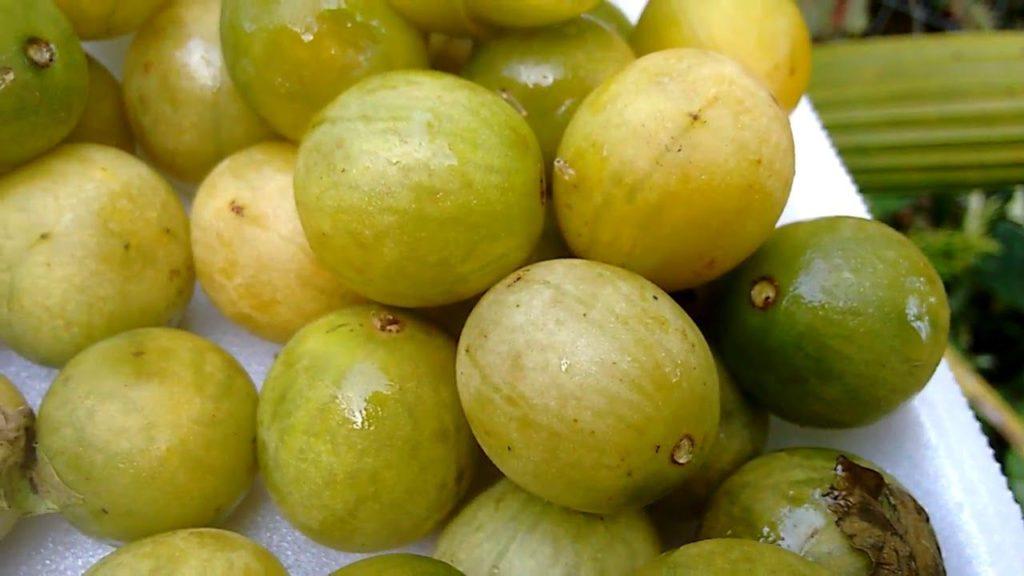 imbu-fruta