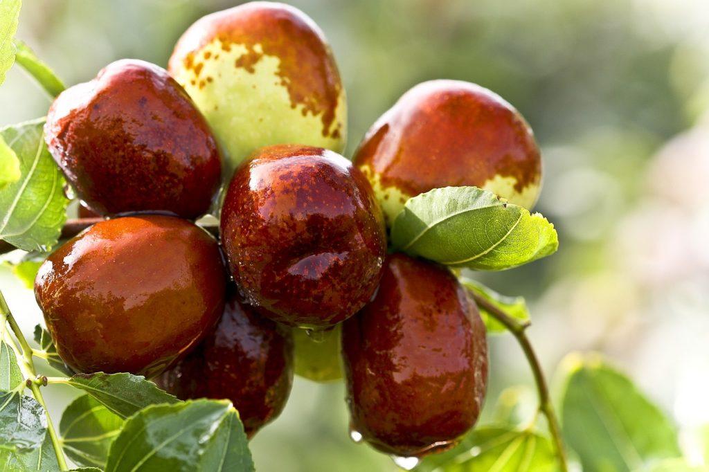 jujuba-fruta