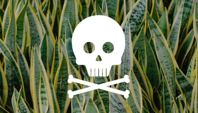 plantas-tóxicas-capa