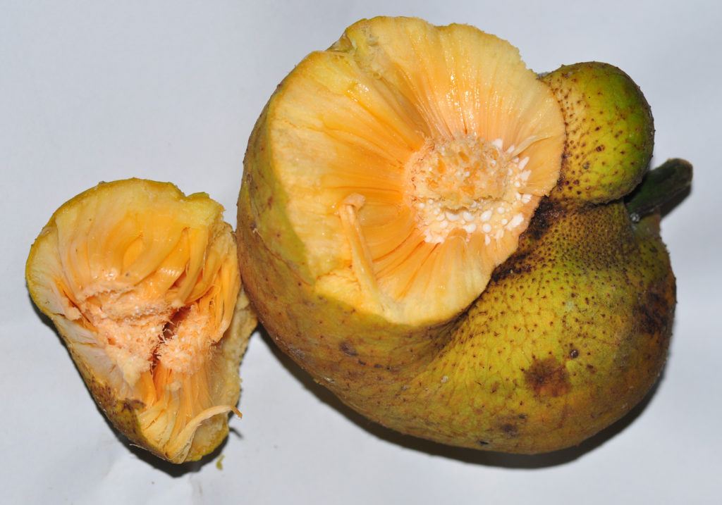 fruta-com-l-lacucha