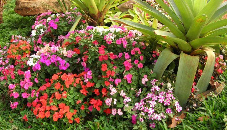 Plantas Para Jardim Veja As Espécies Ideais Para Decorar