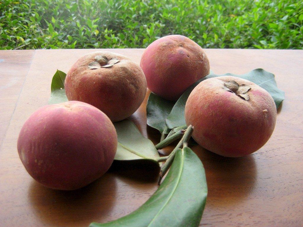 mabolo-fruta