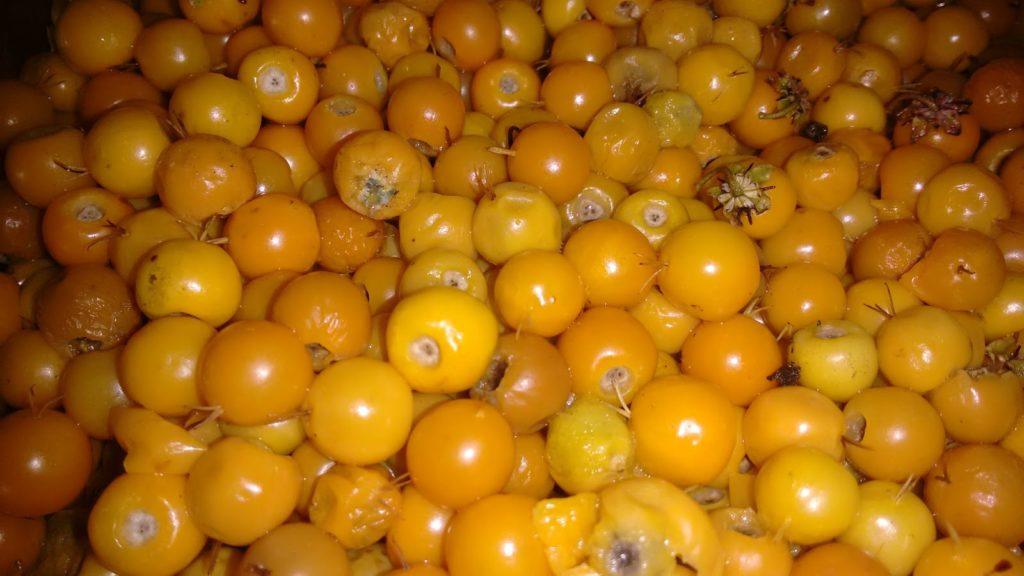 murici-fruta