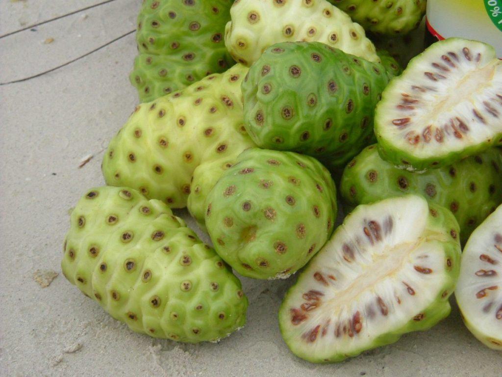 noni-fruta