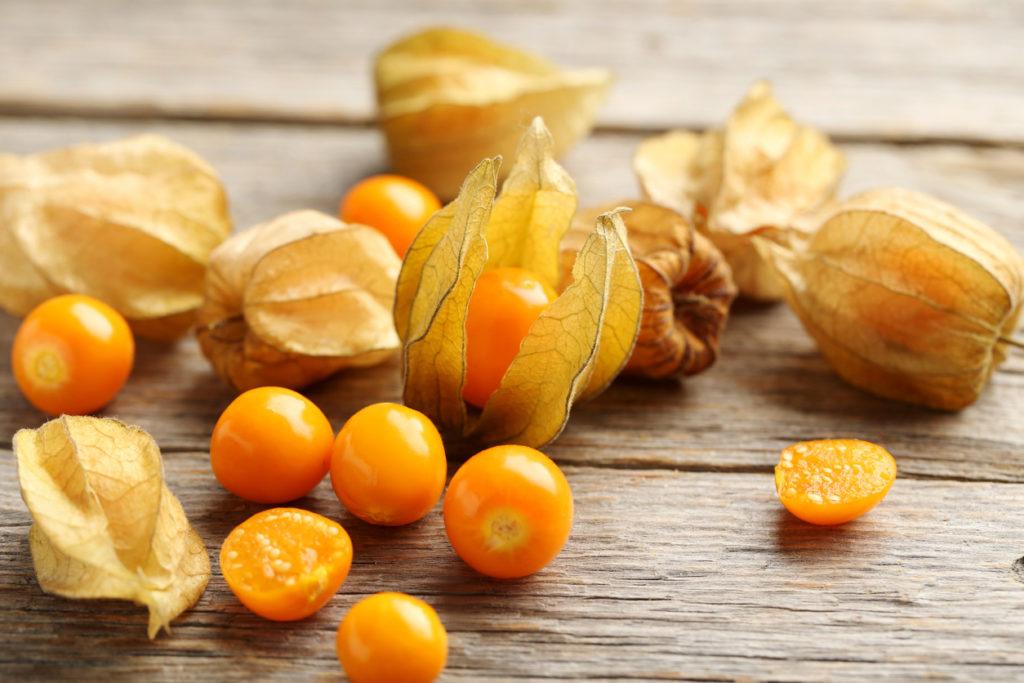 physalis-fruta