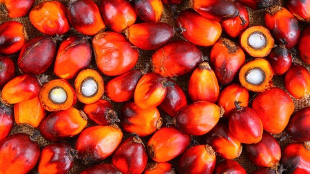 pupunha-fruta