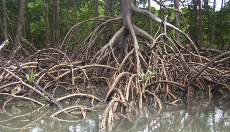 Partes das plantas: raízes