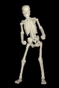 Membros do corpo