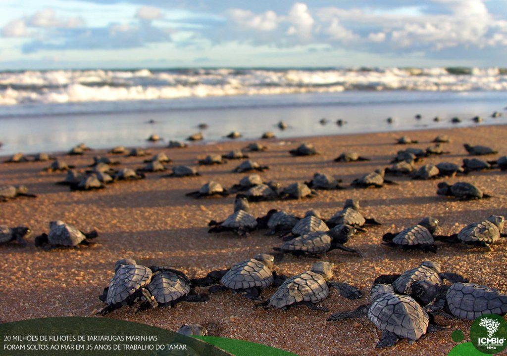 projeto tamar tartarugas