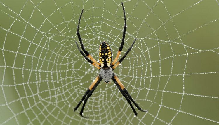 Artrópodes - Aranha e teia