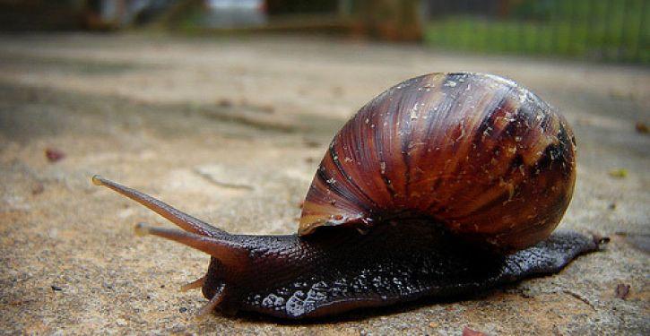 Filo Mollusca - molusco gastrópode