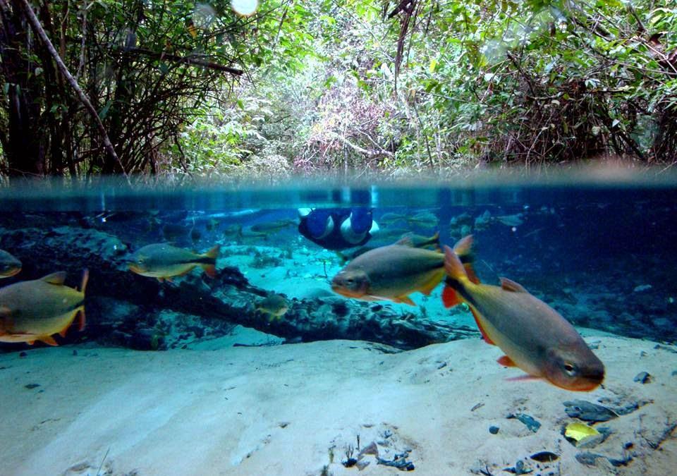 Ecossistema aquático - rio