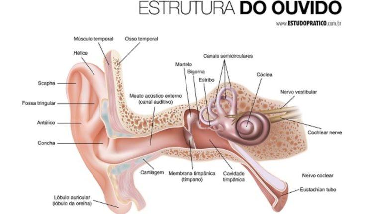 Estrutura do ouvido