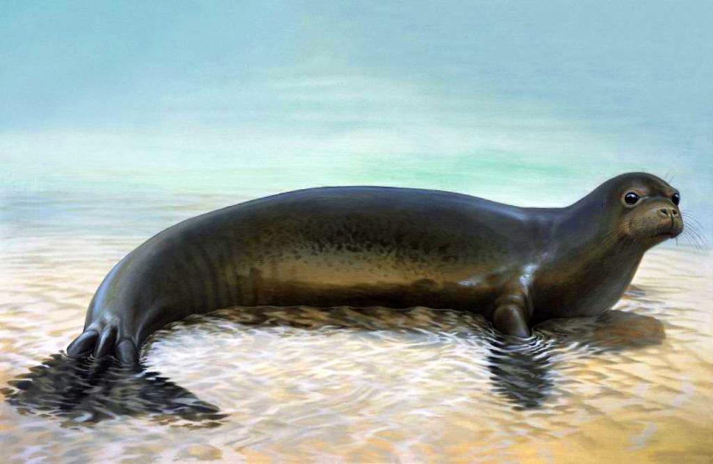Foca-monge-do-caribe