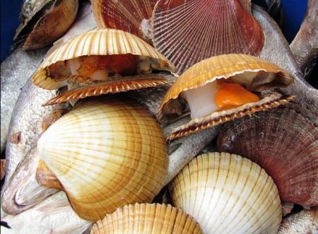 Filo Mollusca - molusco bivalve