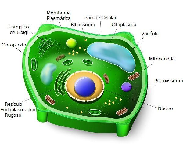 Célula Vegetal - estrutura anatômica