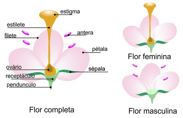 Flores - Estrutura das flores completas e incompletas.