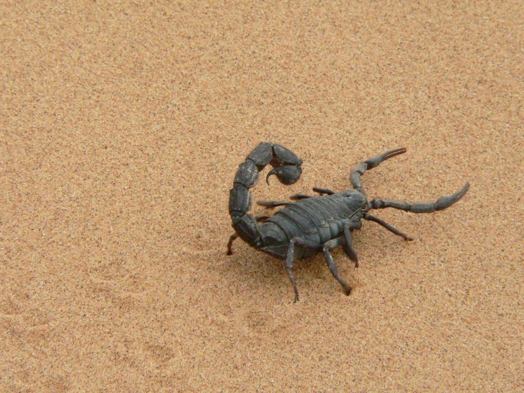 Animal com E - Escorpião