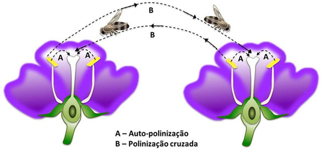 Flores - polinização