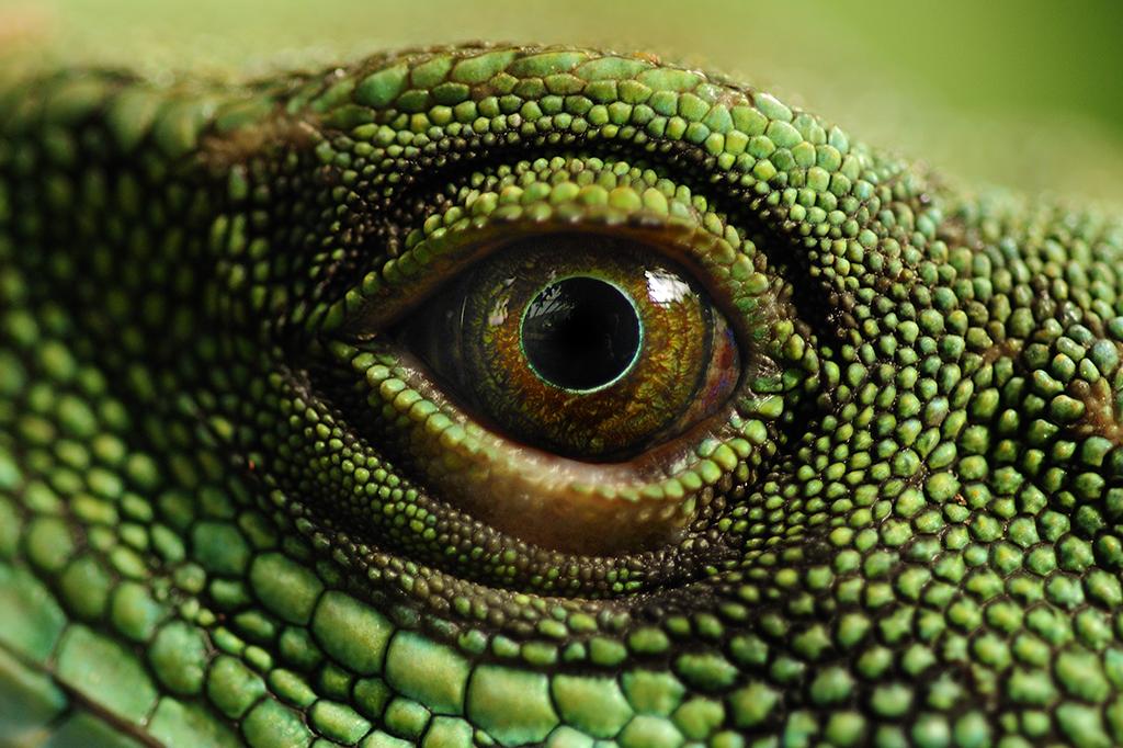 Os reptilianos controlam o mundo