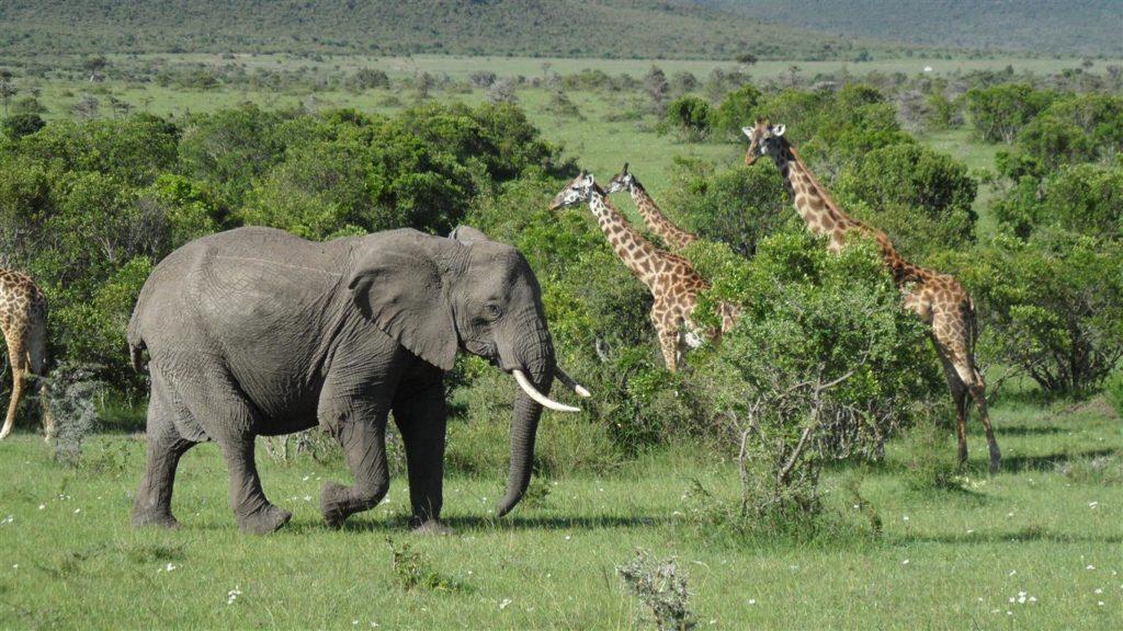 Safaria no Quênia turismo