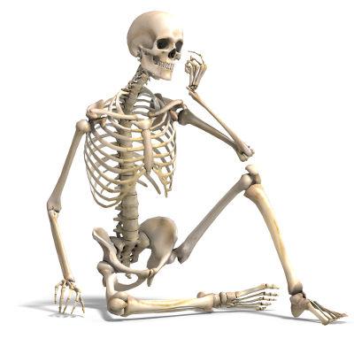 Sistemas do corpo humano: sistema esquelético