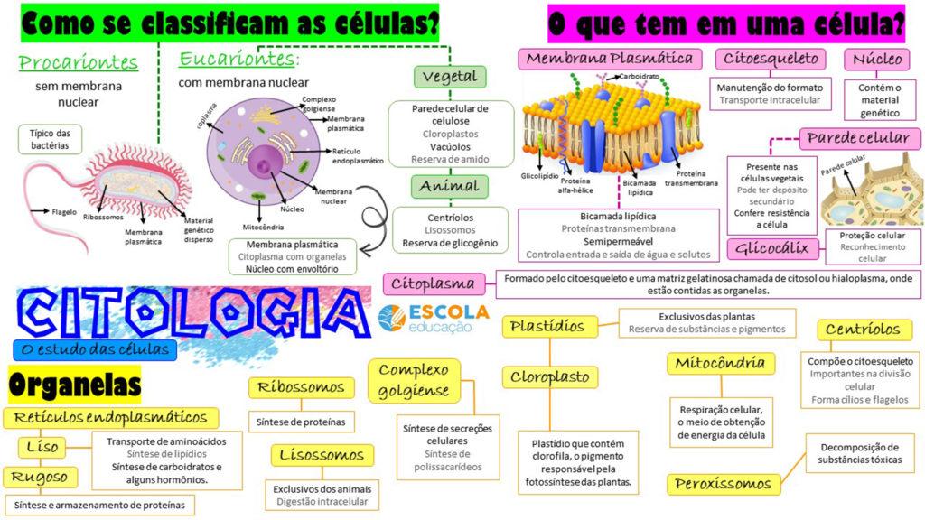 Citologia - Mapa mental