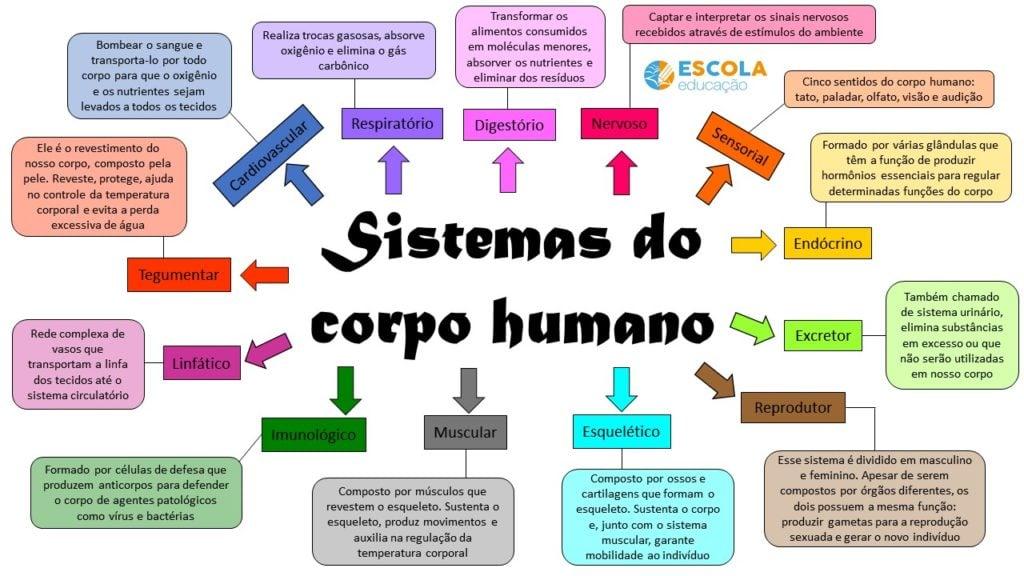 Mapa mental sobre sistemas do corpo humano