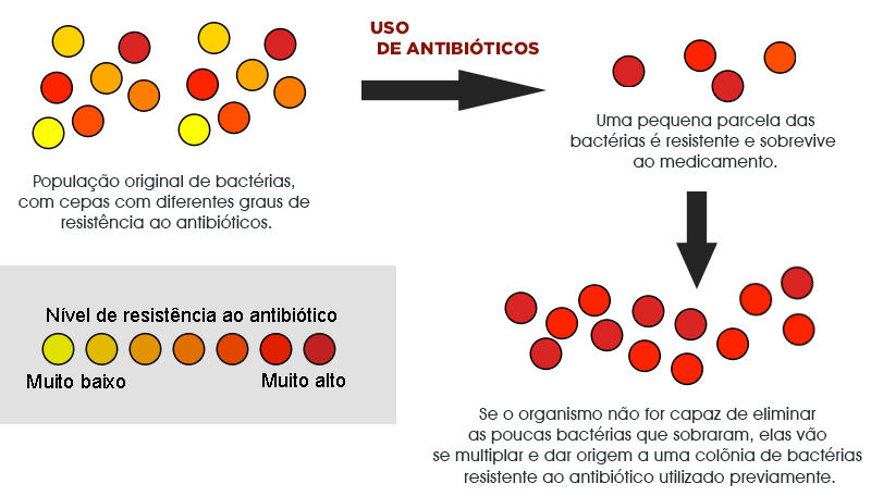 Seleção natural - bactérias resistentes a antibióticos
