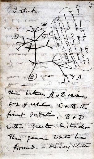 Darwinismo - Esboço original do caderno de anotações de Darwin, contendo o rascunho da teoria da evolução em que ele acreditava.