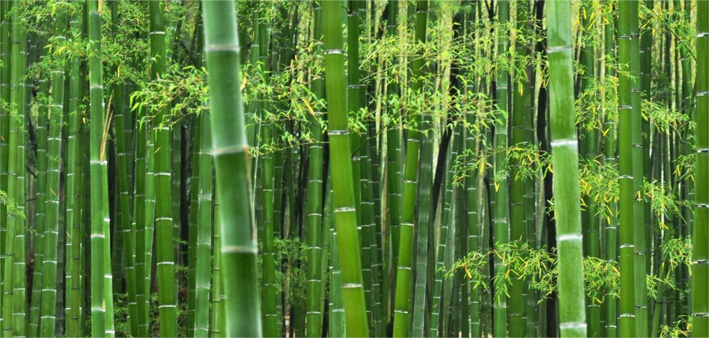 Caule - Colmo oco de bambu