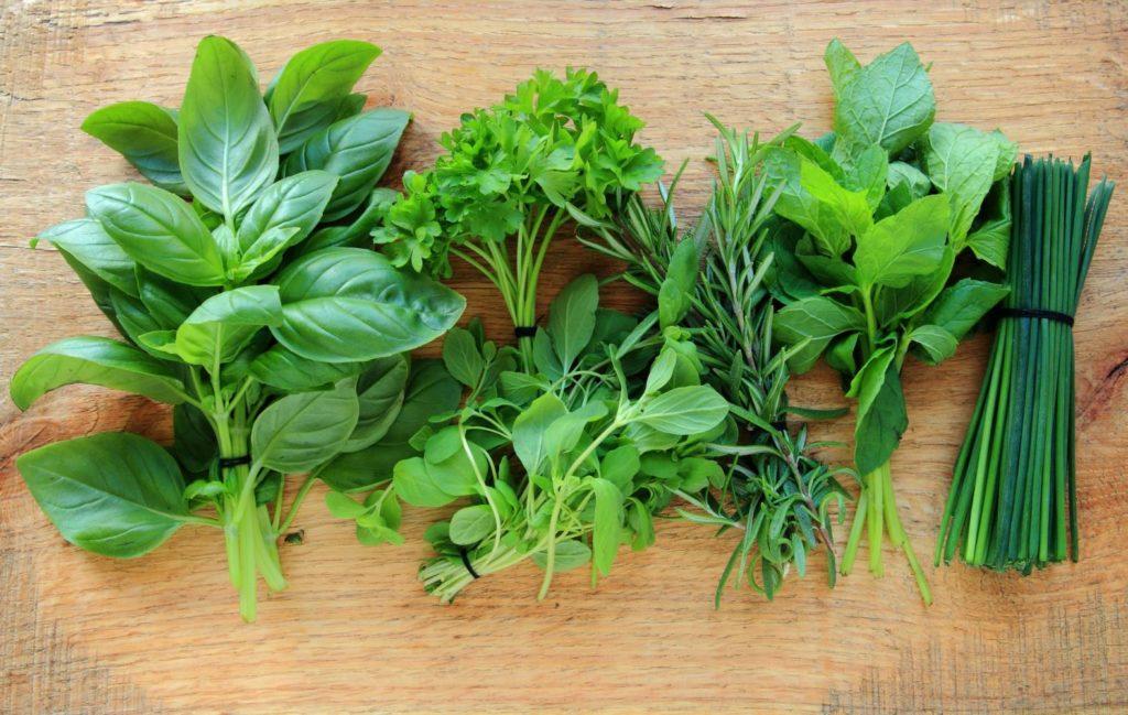 Caule - Haste em plantas herbáceas