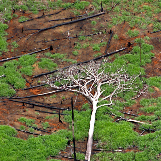 Desmatamento em Rondônia