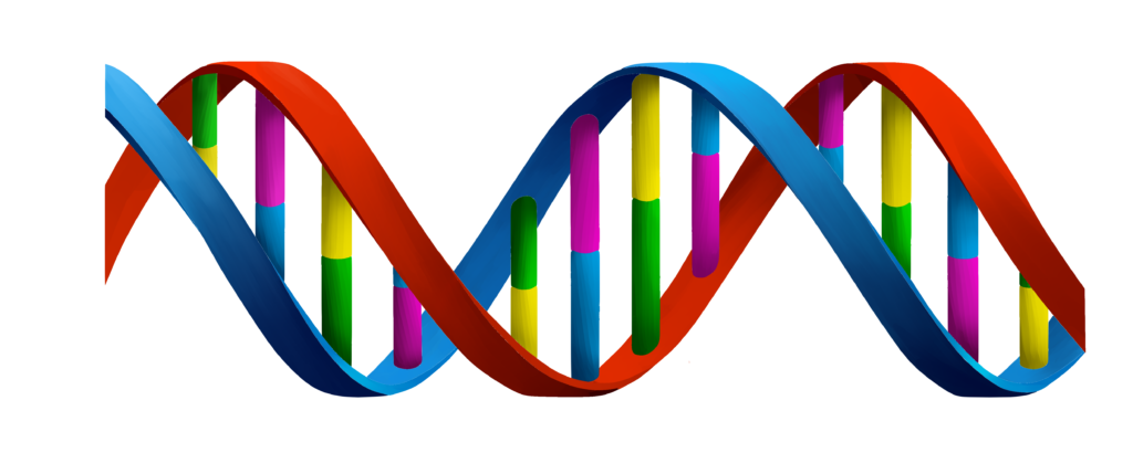 Ácidos nucleicos - DNA fita dupla