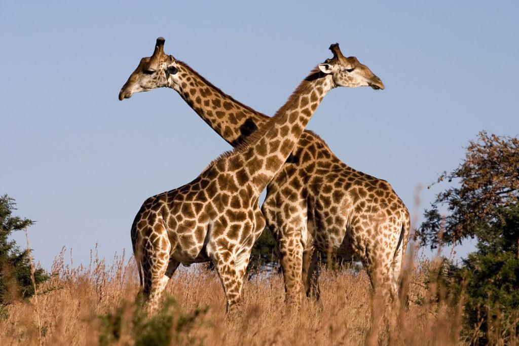 Fauna da África