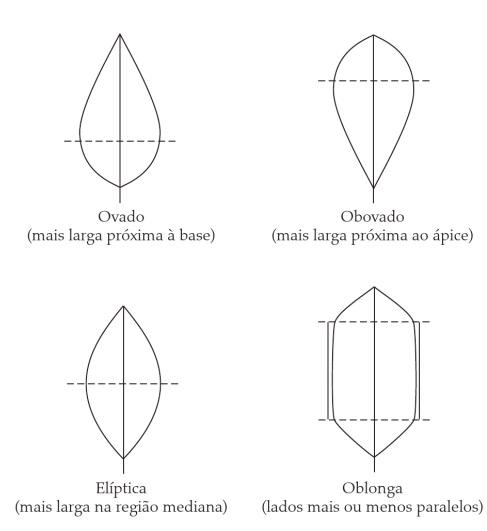 Classificação de folhas - Formato do limbo (Imagem retirada do livro Sistemática Vegetal 3 ed Um Enfoque Filogenético)
