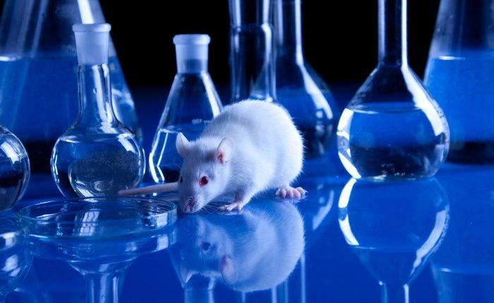 Experimento - Laboratório e rato